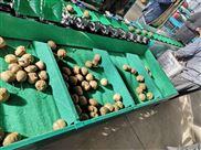 19款猕猴桃选果机-不伤果的好机