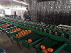 XGJ-Z-3优质丑橘选果机只为让丑橘更加优秀无敌