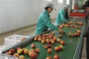 供应山东苹果选果机19年爆款厂家直销