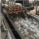 链板式网带式不锈钢果蔬气泡清洗机