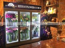 广州风冷双门鲜花保鲜柜的价格