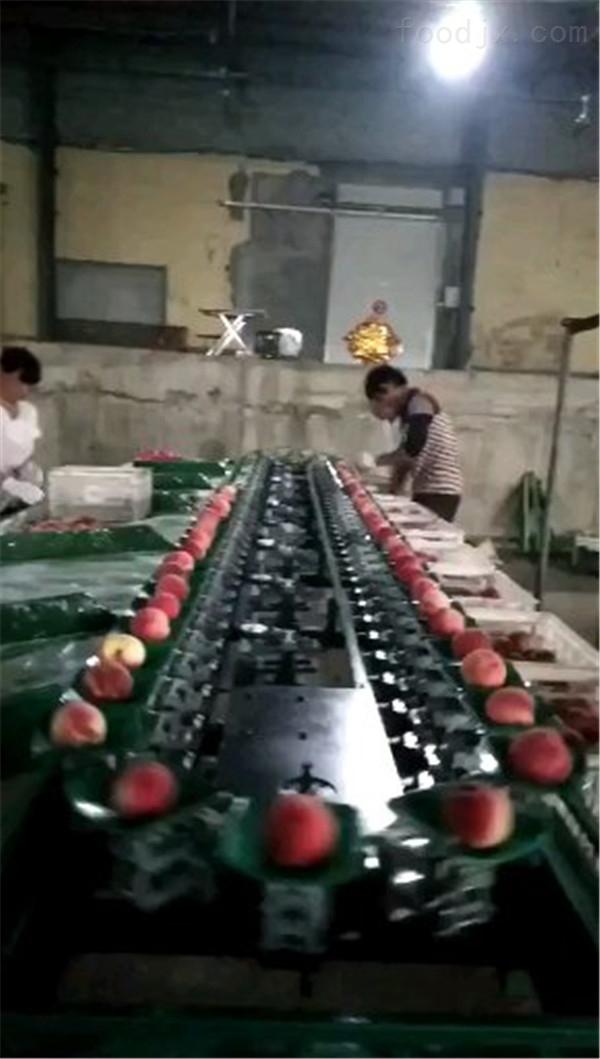 不伤果的奉化水蜜桃选果机 分选机价格