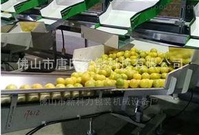 福建蘆柑套袋包裝機