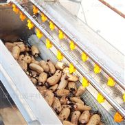 马铃薯清洗去皮毛辊清洗机