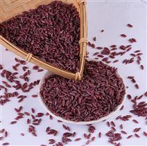 新品推薦谷香有機紫淮山米紫色大米生產線