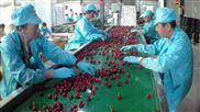 米夏镇采购樱桃预冷清洗设备 樱桃分选机