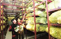 在上海建個蔬菜保鮮庫要多少錢