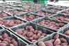 1000吨紫薯保鲜库的设计规划及造价