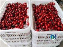 櫻桃水果保鮮冷庫的做法及注意事項