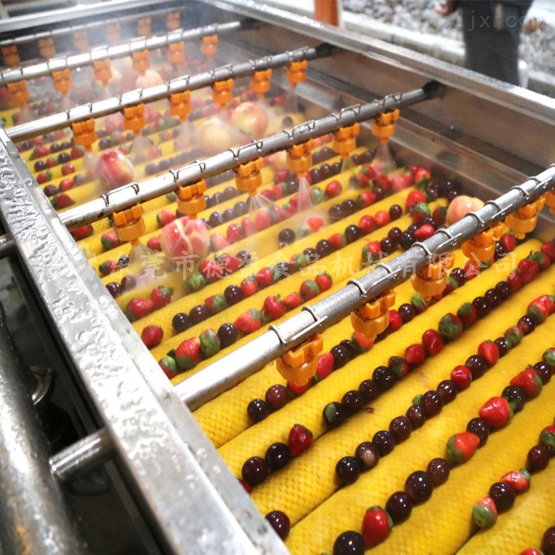 DY-2500-草莓清洗设备水果清洗机
