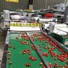 6XY-2河南登封大樱桃选果机使用说明书及设备优点