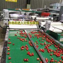 河南登封大樱桃选果机使用说明书及设备优点