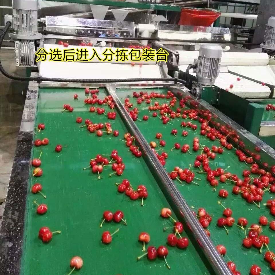 河南大樱桃选果机 预冷包装机产品特点
