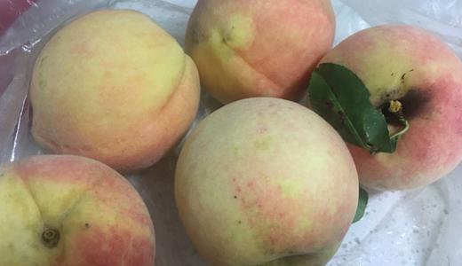 桃子丰收 水果深加工设备助力果农增收