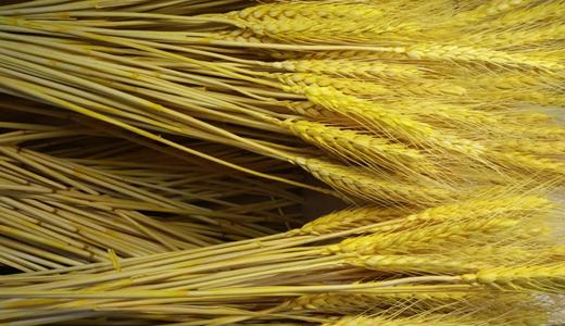 粮食加工市场持续扩大 粮机企业如何深耕品质?