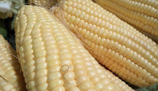 深加工延伸玉米产业链 设备创新成行业洗牌胜负手