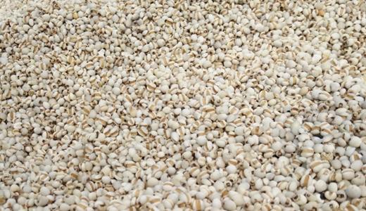 糧食產量再創新高 生產機械還需補足短板
