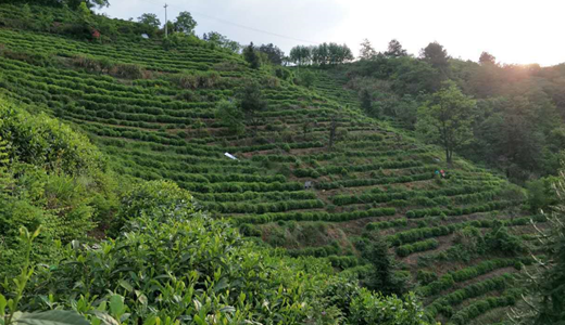 第一产业突破2千亿 贵州推进农业现代化发展