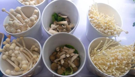 菌包市场需求旺盛 自动生产线增强经济效益